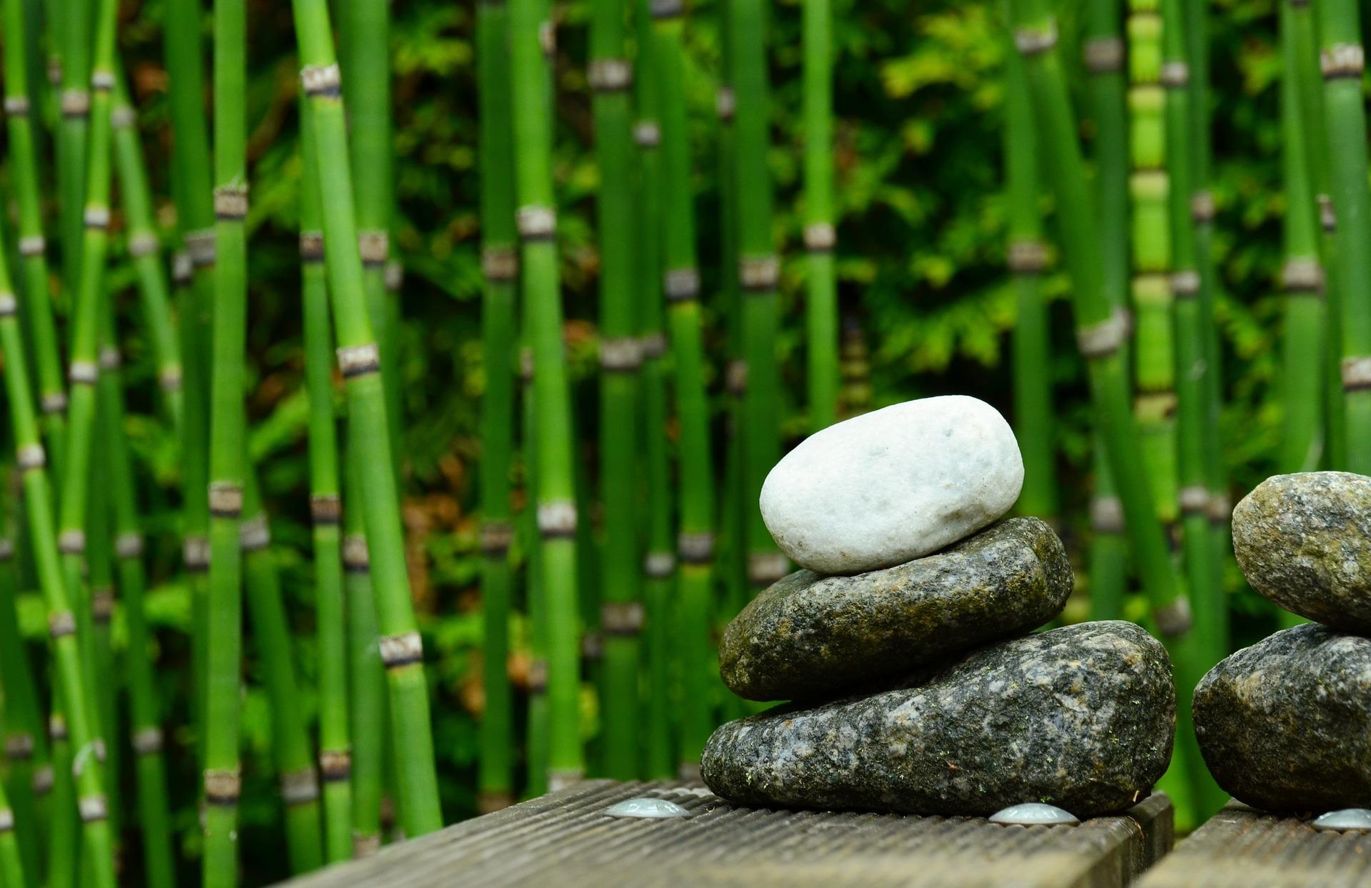 Que te den… ¡bambú!