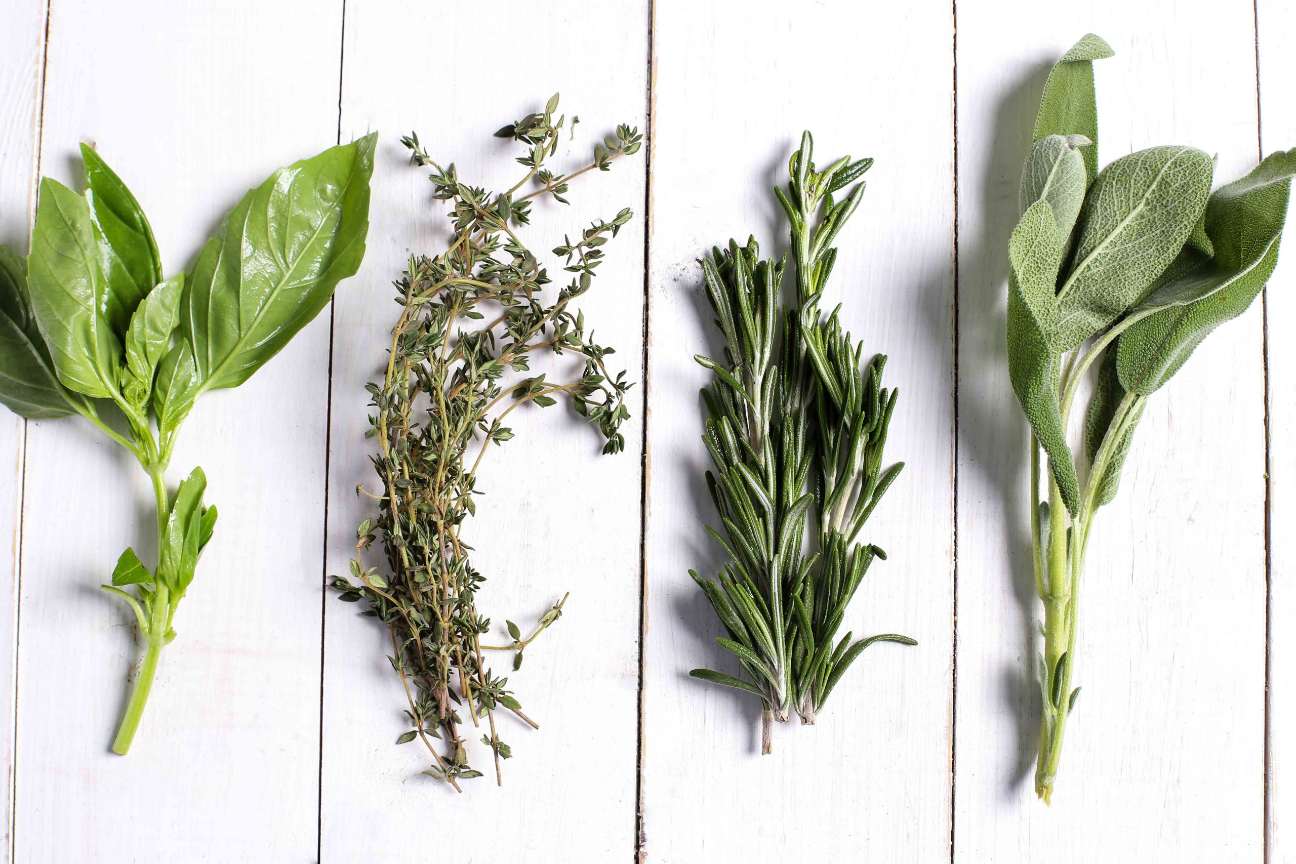 5 plantas medicinales que no deben faltar en tu terraza